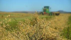 Cosechadora que recoge cosechas Cosecha del trigo, máquinas segadores que trabajan en la avena, trigo, campo del centeno, campo d metrajes