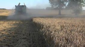 Cosechadora rural en el centeno que cosecha en el campo de granja y el polvo 4K almacen de video