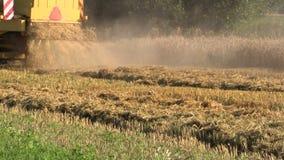 Cosechadora trasera de la máquina segador del amarillo de la granja de la visión que trabaja en campo de grano almacen de video