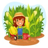 Cosechando el granjero de sexo femenino In un campo de maíz Imagenes de archivo
