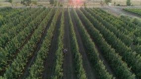 Cosechando, la familia rural joven de jardinero recoge manzanas en cesta en el jardín almacen de metraje de vídeo