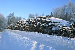 Cosechando la madera abre una sesión un bosque fotografía de archivo libre de regalías