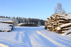 Cosechando la madera abre una sesión un bosque Foto de archivo libre de regalías
