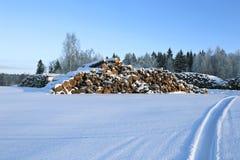 Cosechando la madera abre una sesión un bosque Fotos de archivo libres de regalías