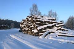 Cosechando la madera abre una sesión un bosque Imagen de archivo