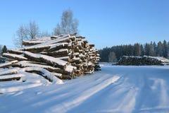 Cosechando la madera abre una sesión un bosque Imágenes de archivo libres de regalías