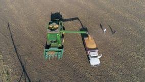 Cosechando, maíz de colada de la maquinaria agrícola en el camión en el campo para el transporte en la visión aérea metrajes