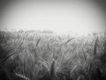 cosechas Fotografía de archivo
