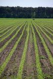 Cosechas agrícolas Foto de archivo libre de regalías