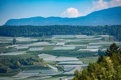 Cosechas de manzanas de Val di Non en Trentino Italia Imagen de archivo