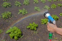 Cosechas de riego con un arco iris Imagenes de archivo