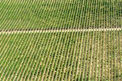 Cosechas del vino fotos de archivo