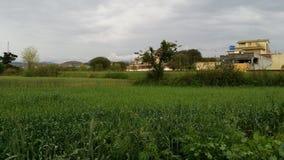 Cosechas en azadkashmir Foto de archivo libre de regalías