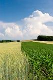 Cosechas en el campo con las nubes Foto de archivo