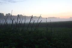 Cosechas en puesta del sol Imagen de archivo