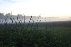 Cosechas en puesta del sol Fotografía de archivo libre de regalías