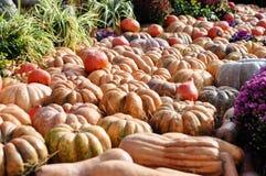 Coseche el día de fiesta, mercado de la granja, decoraciones festivas con las calabazas imágenes de archivo libres de regalías