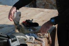 Coseche la opinión el hombre adulto del buceador en una costa con el pulpo recién pescado y el engranaje spearfishing fotos de archivo