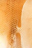 Coseup selvaggio di struttura del favo della cera delle api Forma di esagoni irregolari della cera dentro l'alveare immagine stock