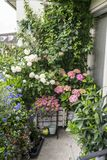 Cosiness with flowers and plants on the balcony royalty free stock photo
