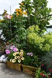 Cosiness with flowers and plants on the balcony royalty free stock images