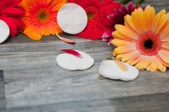 Cosméticos naturais com ingredientes ervais, close-up e de ferramentas do cuidado da pele e do corpo: óleo do shea, garrafas de v Foto de Stock Royalty Free