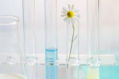 Cosméticos saudáveis ervais naturais no laboratório Fotos de Stock