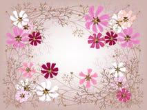 Cosmea frame Stock Image