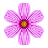 Cosmea rosado Rose Flower Kaleidoscope Isolated en blanco Imagenes de archivo
