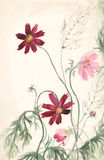 Cosmea watercolor painting Royalty Free Stock Photos