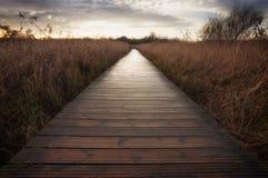 Cosmeston jeziora boardwalk Fotografia Stock