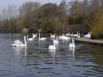 Cosmeston Lake Country Park, Glamorgan Stock Image