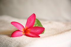 Cosmetic. Bloom and leaf, taken at a Thai Spa Royalty Free Stock Images