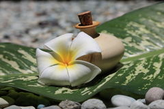 Cosmetic. Lotion, bloom and leaf, taken at a Thai Spa Stock Photo