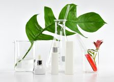 Cosmetic bottle containers with green herbal leaves and scientific glassware, Blank label package for branding mock-up. Research and develop natural organic stock images
