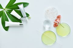 Cosmetic bottle containers with skin care raw materials, Blank label for branding mock-up. Natural beauty product concept royalty free stock images