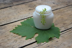 Cosmetic cream with grape leaf royalty free stock images