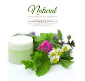 Cosmetic cream with herbs Stock Photography
