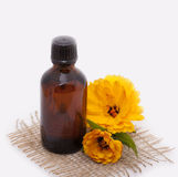 Cosmetic oil from marigold Royalty Free Stock Photo