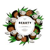 Cosmetic packaging template. Coconut nut oil beauty product. Vector hand drawn illustration. Organic vegetarian food. Ingredient. Good for label, beauty shop royalty free illustration