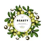 Cosmetic packaging template. Macadamia nut oil beauty product. Vector hand drawn illustration. Organic vegetarian food. Ingredient. Good for label, beauty shop stock illustration