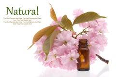 Cosmetici naturali, rimedi Fotografie Stock Libere da Diritti