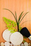 Cosmetics brush and sponge with branch Stock Photography
