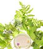 Cosmetics and herb Stock Image