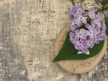 Cosmetic product with lilac flowers, fresh as spring concept Stock Image