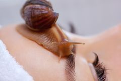 Cosmetological procedure. Beautiful young woman with a snail ahatin on her face royalty free stock images
