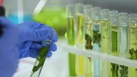 Cosmetology εργαζόμενος εργαστηρίων που χαρακτηρίζει το δείγμα των εγκαταστάσεων στο σωλήνα δοκιμής, φυσική ουσία φιλμ μικρού μήκους