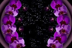 Cosmic orchid Royalty Free Stock Images