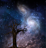Cosmic Tree. High Resolution Tree with Space Stock Images