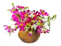 Cosmo und tadellose Blumen Lizenzfreie Stockfotos